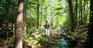 Ziplining Adirondacks Westwood Forest